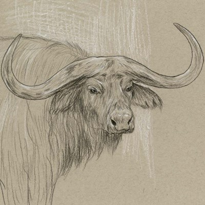 Longhorn Sketch II Poster by Melissa Wang for $52.50 CAD
