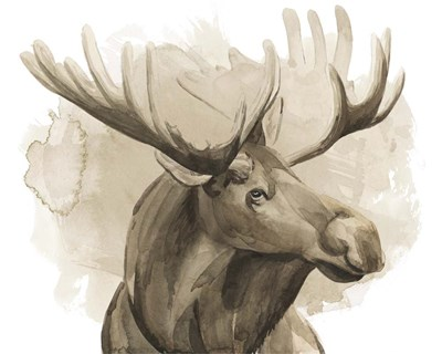 Bull Moose I Poster by Grace Popp for $87.50 CAD