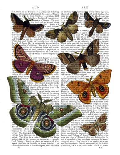 Moth Plate 2 Poster by Fab Funky for $31.25 CAD