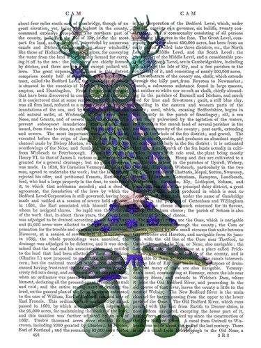 Owl on Mushrooms Poster by Fab Funky for $38.75 CAD