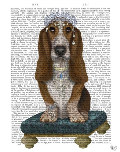 Basset Hound and Tiara Poster by Fab Funky for $33.75 CAD