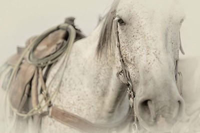 Cow Pony Poster by PHBurchett for $60.00 CAD