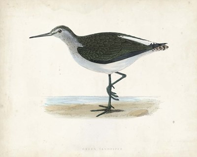 Sandpiper VI Poster by Morris for $53.75 CAD
