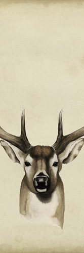 Triptych Whitetail II Poster by Grace Popp for $38.75 CAD