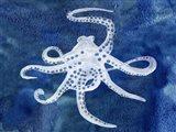 Cephalopod II