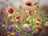 Wild Blooms I
