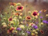 Wild Blooms IV