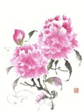 Peonie Blossoms II