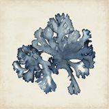 Seaweed Specimens IX