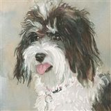 Neely Schnoodle