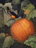 Oriole & Pumpkin
