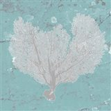 Graphic Sea Fan VI