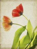 Parchment Flowers VI