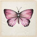 Butterfly Study IV