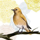 Mandala Bird II