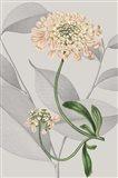 Botanical Arrangement I