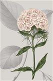 Botanical Arrangement III