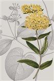 Botanical Arrangement V