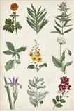 Botanical Chart II