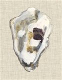 Oyster Shell Study II