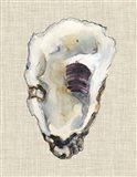 Oyster Shell Study III