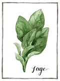 Watercolor Herbs VI