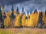 Through the Yellow Trees I