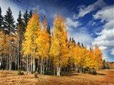 Through the Yellow Trees II