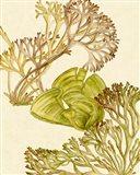 Vintage Seaweed Collection II