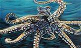 Wild Octopus II