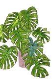 Potted Jungle I