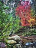 Peaceful Woods II