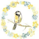 Solo Songbird II