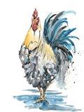 Rooster Splash II