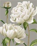 White Peonies I