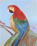 Parrot Wonder II