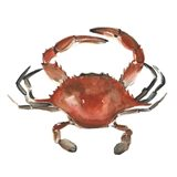 Watercolor Crab I