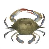 Watercolor Crab II