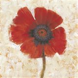 Red Poppy Portrait I