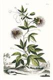 Munting Garden Varieties II
