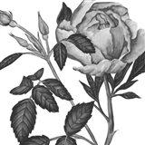 Flowers in Grey I