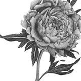 Flowers in Grey II