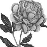 Flowers in Grey IV
