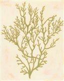 Deep Sea Coral I