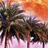Hifi Palms I