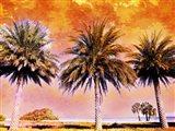Hifi Palms II
