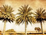 Palms on Brown II