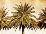 Palms on Brown III