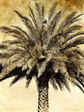 Palms on Brown V