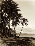 Island Palms I